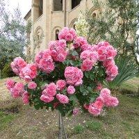 В саду Храма Самеба в Тбилиси :: Наиля