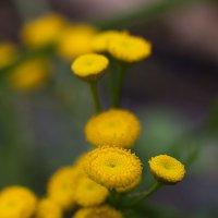 Цветы :: Albina Lukyanchenko