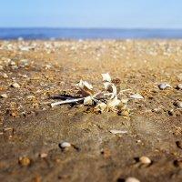 Просто колючка ))) На море даже колючки впечатляют! :: Юлия Новикова