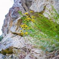 Цветы на скале :: LionLeo66 Шпак ОВ