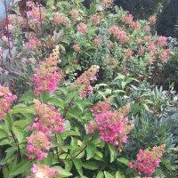 Розовой сад :: minchanka
