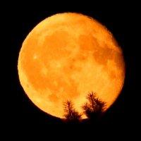 на веточках сосновых румянилась луна :: Alisa Koteva