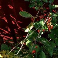 Зелёное и красное :: Tanja Gerster