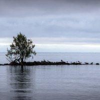 Островок :: VL