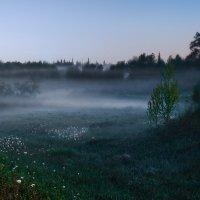 Вечерний туман :: Владимир Деньгуб
