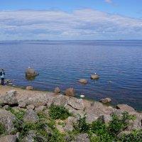 Берег Финского залива :: Ольга