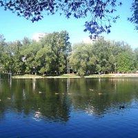 Летом на городском озере :: Елена Семигина