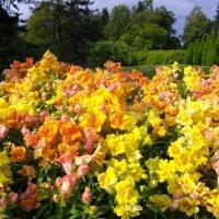 Красочное цветение. :: Лия ☼