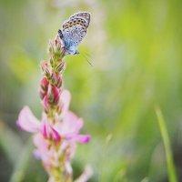 Послеобеденная сиеста... Жизнь насекомых... Afternoon siesta... Life of insects... :: Сергей Леонтьев