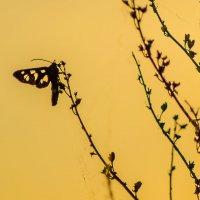 На закате :: Андрей Щетинин