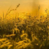 Золото заката :: Андрей Щетинин