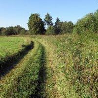Путь-дорожка :: AleksSPb