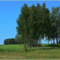 Поле,Русское поле....... :: Paparazzi