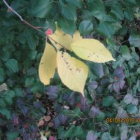 Осень, природа, лес :: Smit Maikl