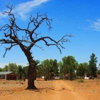 Африка :: Jakob Gardok