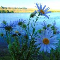 Голубые цветы. :: nadyasilyuk Вознюк