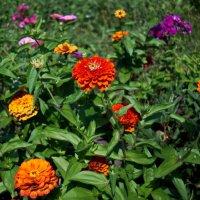 Аленький цветочек :: Сергей Кунаев