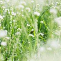 Через зелень и блеск. :: Максим Рябов