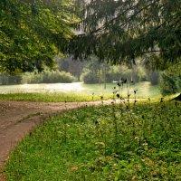 Осеннее утро в парке :: Ирина Румянцева