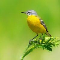 Летние птицы :: Влад
