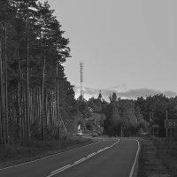 Сосновый лес :: Рома Григорьев