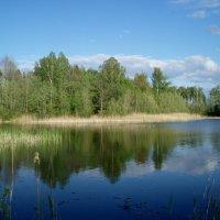 Ežerų krašte / My lake :: silvestras gaiziunas gaiziunas