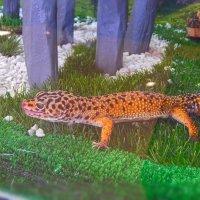 Леопардовый геккон! :: Елена (Elena Fly) Хайдукова