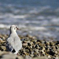 Мир и экология :: Alexandеr P