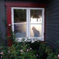 Уютный домик в предместье Стокгольма :: Елена