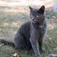 Для хорошего кота и сентябрь март!:) :: Андрей Заломленков