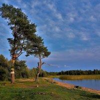 Дальний берег Меглецкого озера... :: Sergey Gordoff