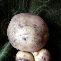 Картофель обнажённый, на зелёном бархате :: Marina Bernackaya Бернацкая