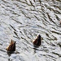 Секция  Синхронное плавание :: олег свирский