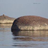 Валуны Финского залива. :: Татьяна