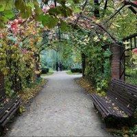 Осенняя пергола :: ZNatasha -