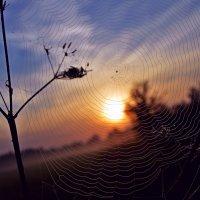Рассвет в стране пауков... :: Vladimir Semenchukov