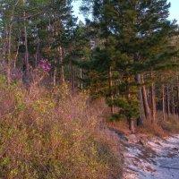 розовая оттенка: 04ч45 утра в лесу над Мысом Песчанная :: Георгий