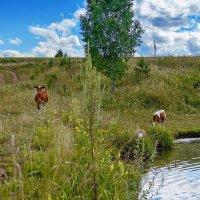 Летом на пастбище :: Владимир Деньгуб