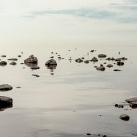 На Финском заливе (25) :: Виталий