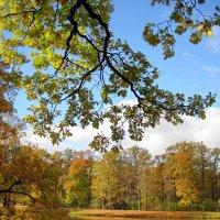 Осенняя картинка :: dli1953