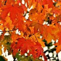 Осень... :: Евгений Яхим