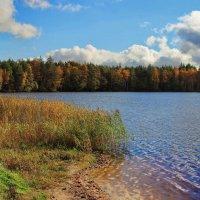 Сентябрьской солнечною грустью... :: Лесо-Вед (Баранов)