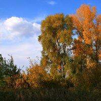 Пришел сентябрь с красками... :: Евгений Юрков