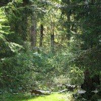 лес на севере :: OLGA