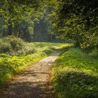 в лесу :: Iulia Efremova