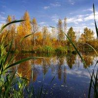 Лесное озерко :: Валерий Талашов