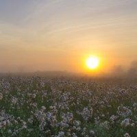 В восход на чертополоховом лугу. :: Igor Andreev