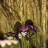 Цветы и колосья :: Алексей Виноградов
