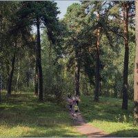 Прогулка по лесу. :: Роланд Дубровский