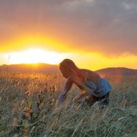 на закате в поле :: Alexandr Staroverov